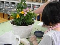 ハーブと花の寄せ植え作り