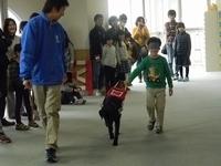 プロから学ぶ 盲導犬訓練士
